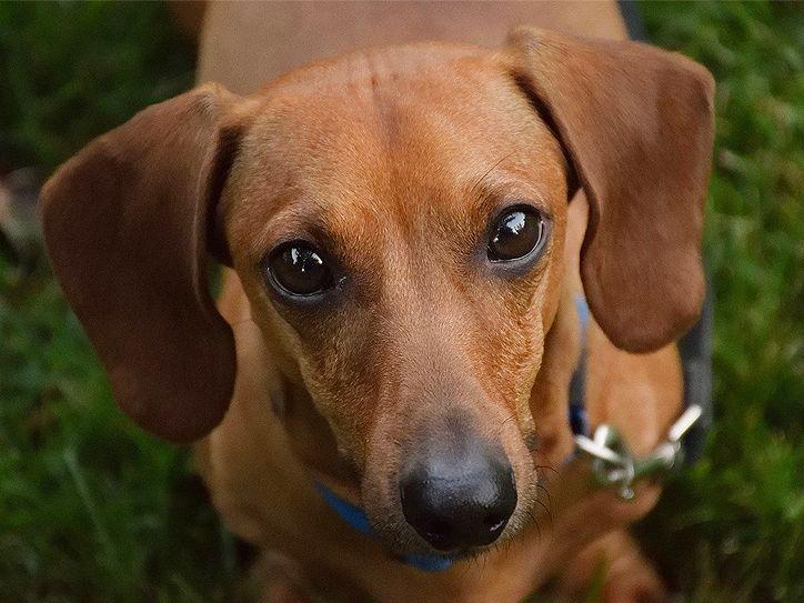 犬 の 名前 ドイツ 語