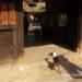犬同伴ランチ♪ペットと巡るうどん県~うどん本陣山田屋~
